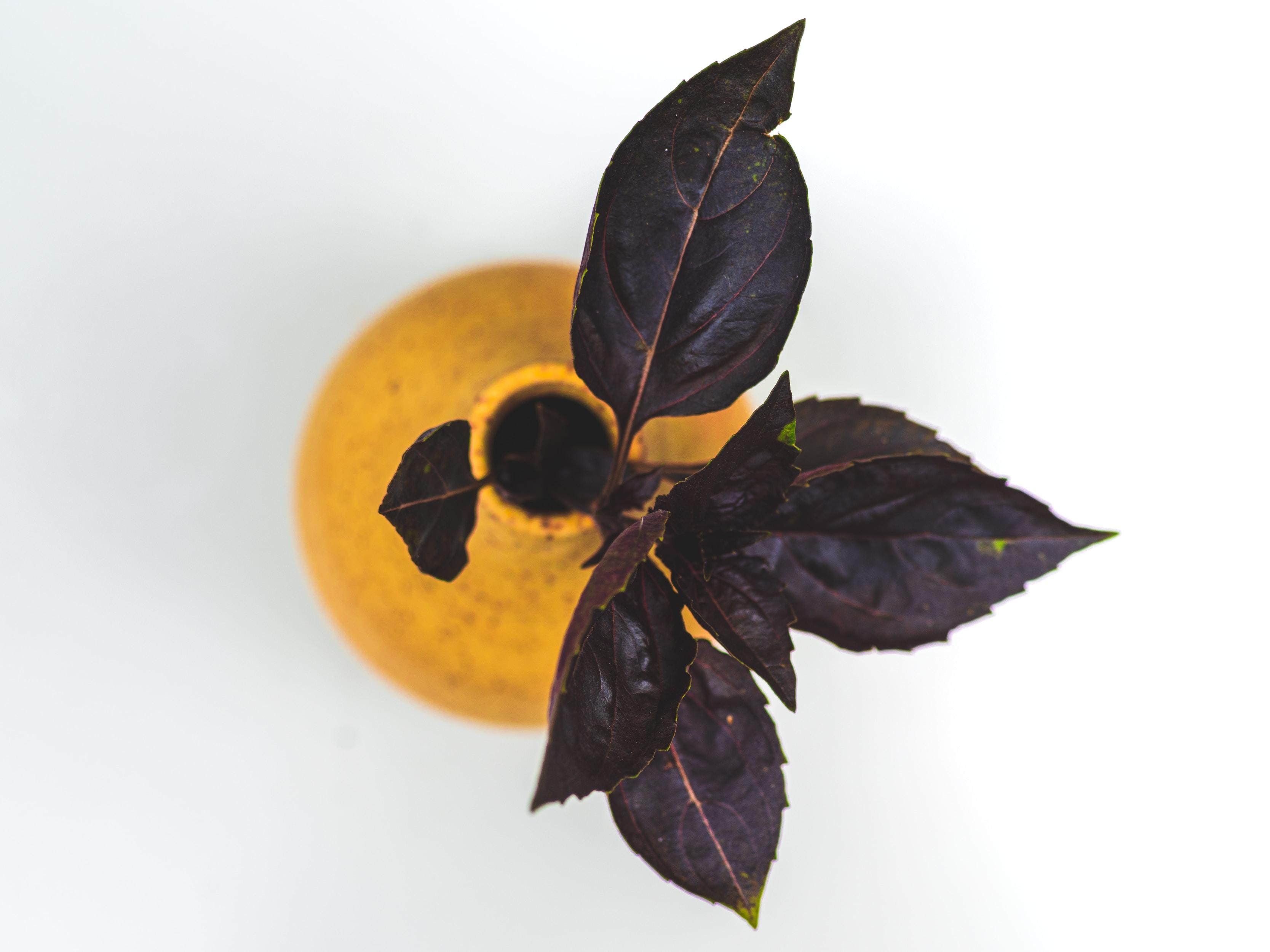 Hatay mutfağı baharatları - Reyhan